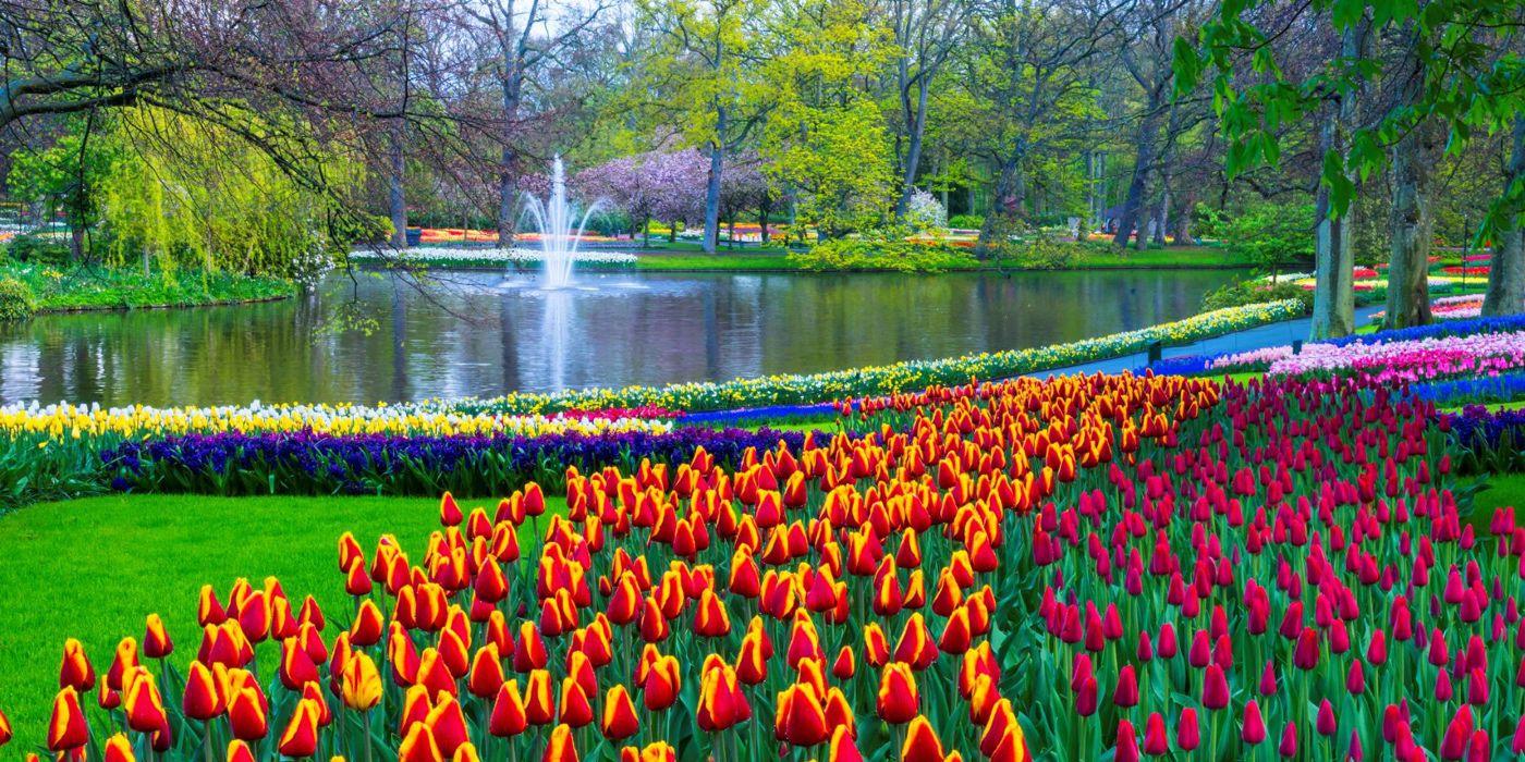 Keukenhof 2019 - Flower PowerKeukenhof es el jardín de flores más grande del mundo y con la llegada de la primavera en este jardín se produce una explosión de gran belleza multicolor.